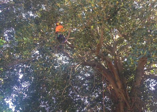 Tree Removal & Pruning